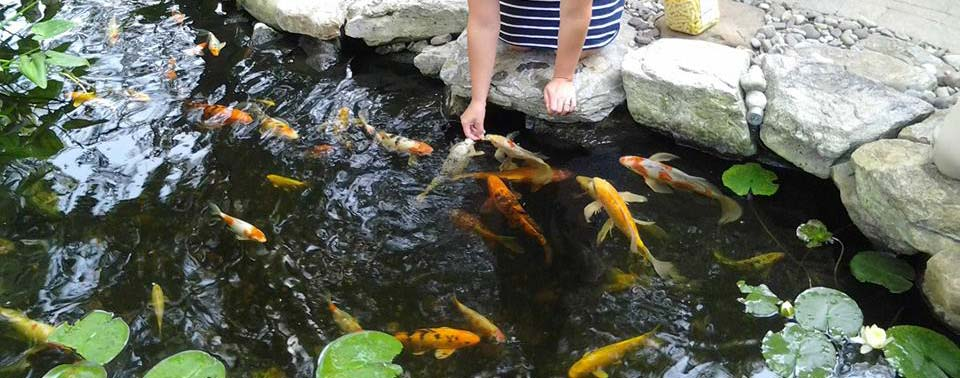 The Secret to Healthy Koi and Pond Fish
