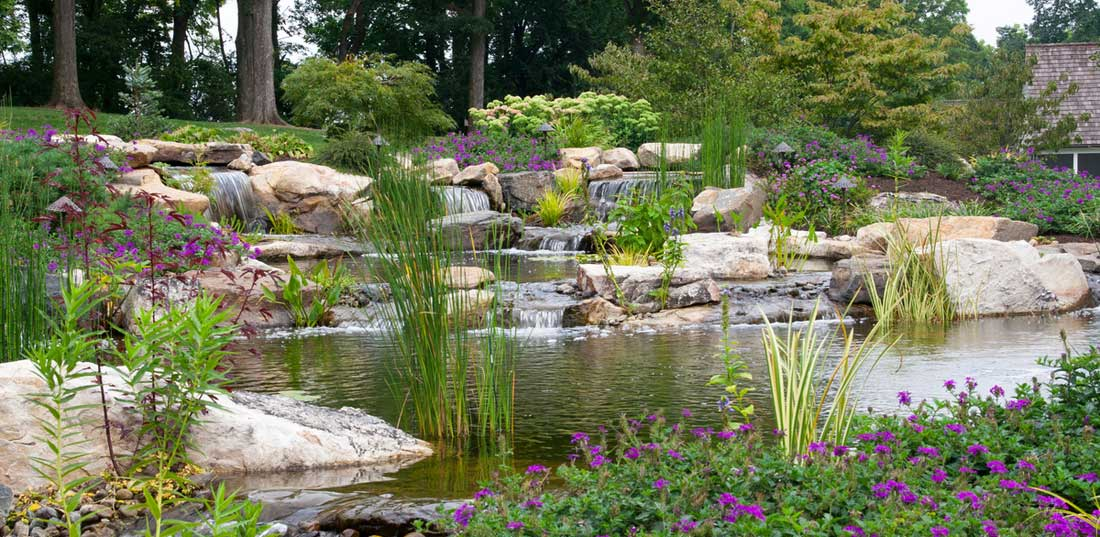 Tips for a Clean and Healthy Pond