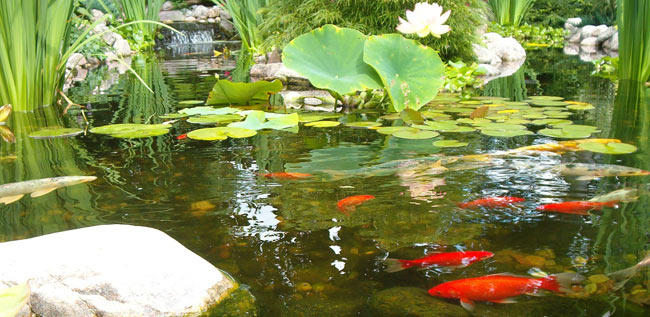 Five Easy Tips for a Clean and Healthy Pond