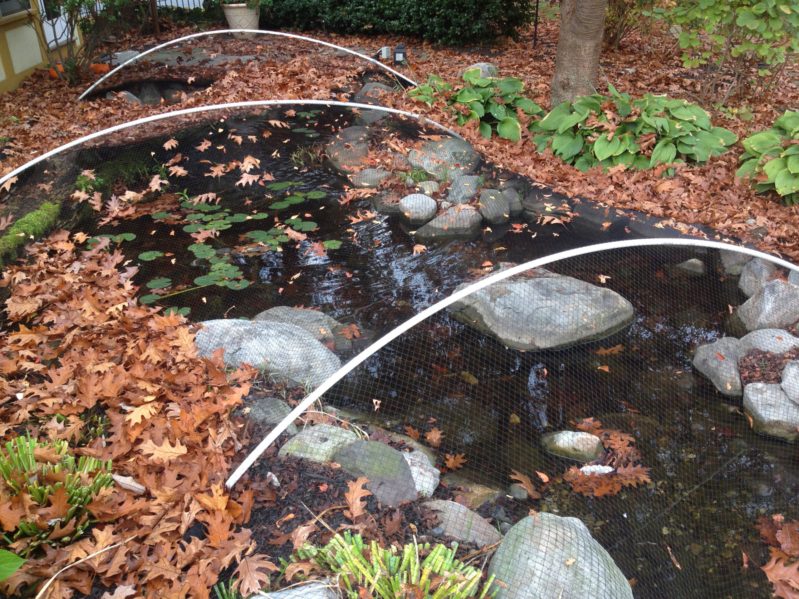 How to Care for Your Pond During Fall