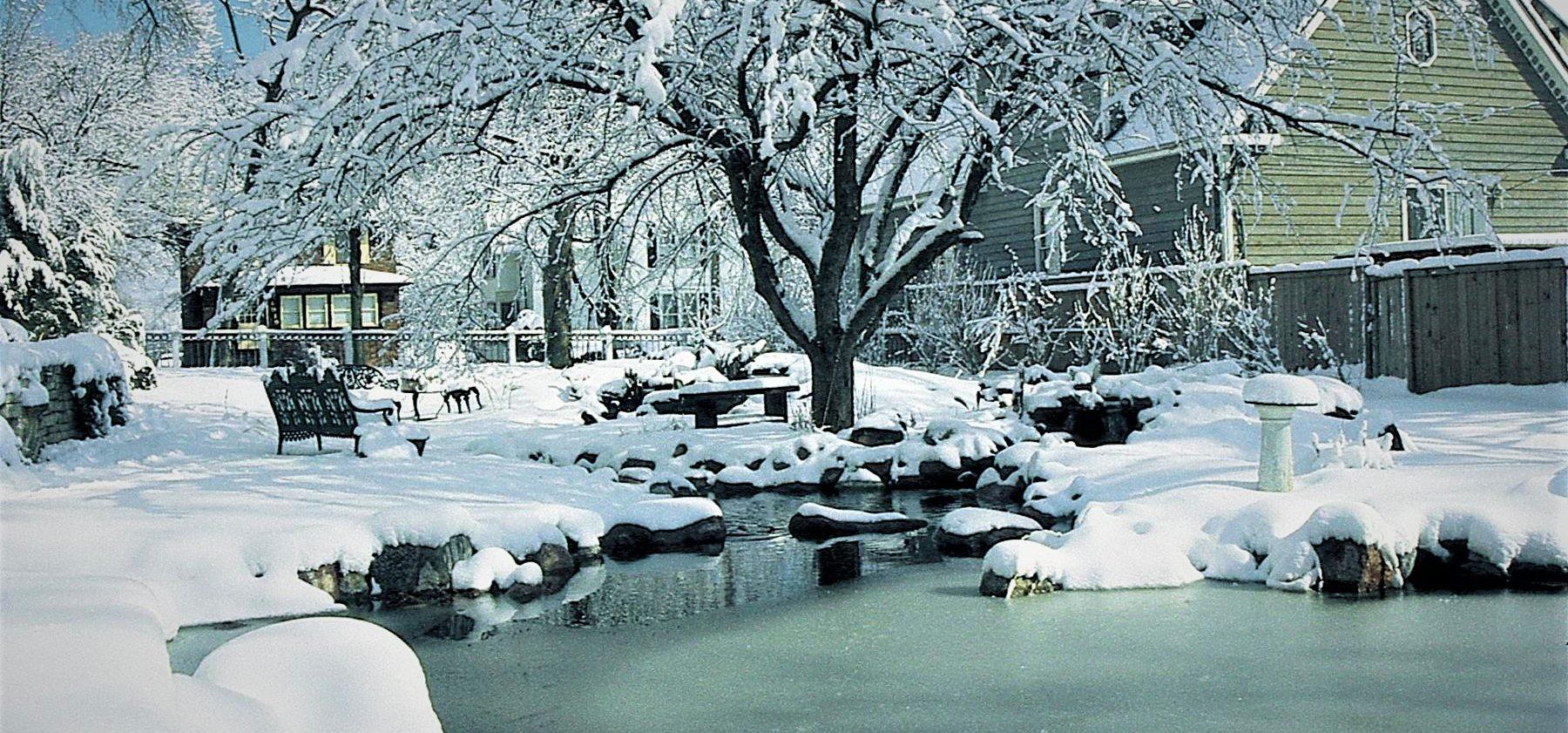 backyard pond in snow