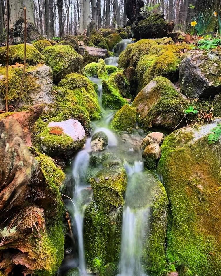 Mossy Pondless Waterfall