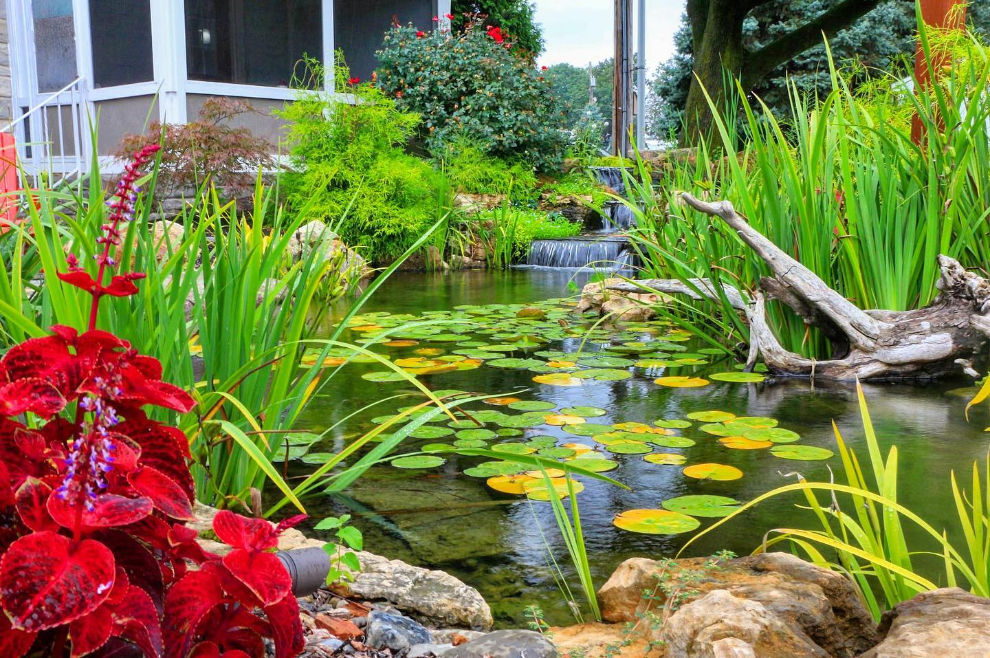 Tips to Keep Clear Pond Water